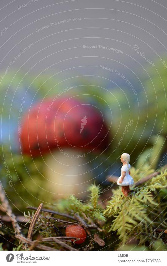 Alice im Schwammerl-Land Mensch maskulin Mädchen 1 3-8 Jahre Kind Kindheit Umwelt Natur Pflanze Wald blond klein niedlich rot weiß Alice im Wunderland Märchen