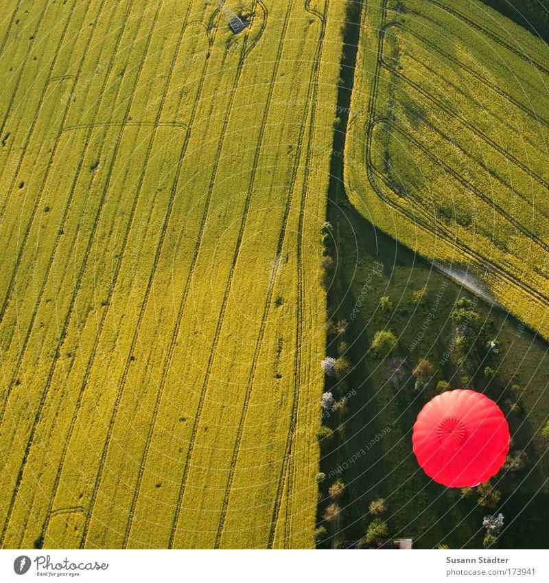 HOT BUTTON Natur Baum Sonne Pflanze rot Sommer gelb Ferne Wiese Freiheit Luft Erde Feld Umwelt fliegen