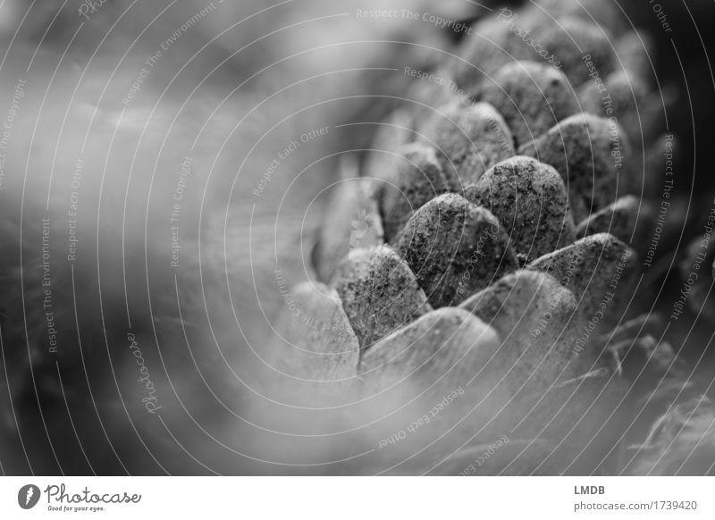 Tannenzapfen Umwelt Pflanze grau schwarz Zapfen Allerheiligen Winter Weihnachtsdekoration besinnlich trist Traurigkeit Hintergrundbild Ziegeldach