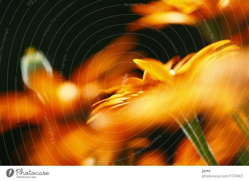 blumen Farbfoto mehrfarbig Außenaufnahme Nahaufnahme Menschenleer Tag Sonnenlicht Starke Tiefenschärfe Zentralperspektive Natur Sommer Schönes Wetter Pflanze