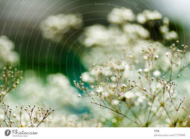 Generations Natur weiß Blume grün blau Pflanze Blüte Wege & Pfade Stimmung Umwelt ästhetisch Wachstum Sträucher zart Blühend türkis