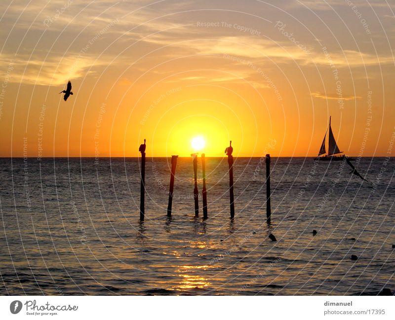 Sonneuntergang Sonnenuntergang Pelikan Wasserfahrzeug Meer water pelican Boa sea.