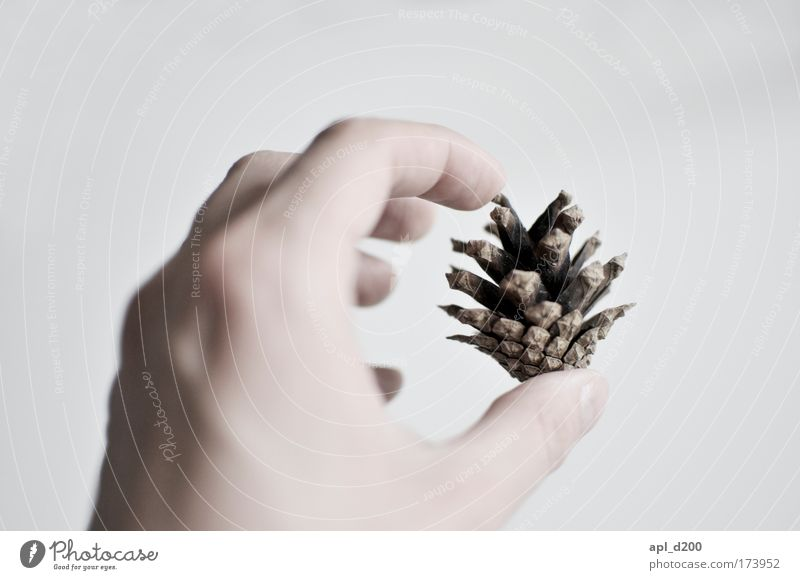 Samenspende Mensch Natur Hand weiß Baum Erwachsene Umwelt braun maskulin ästhetisch authentisch Warmherzigkeit 18-30 Jahre berühren Junger Mann