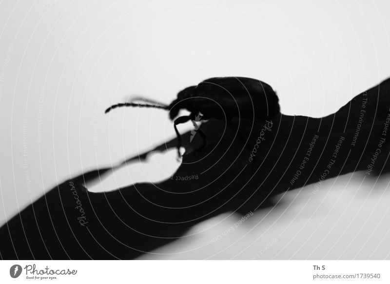 Sommer Natur Pflanze weiß Blatt Tier ruhig schwarz Frühling natürlich Bewegung grau elegant ästhetisch authentisch einzigartig