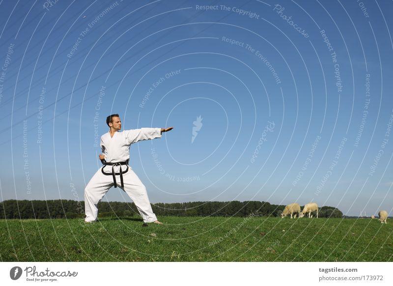 PLATZWART Mann Hand Sport Gesundheit maskulin Aktion Kampfsport Sport-Training sportlich Wachsamkeit Schaf üben Kampfkunst Faust treten Karate