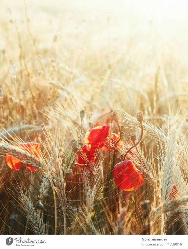 Sommerlich(t) Natur Pflanze Farbe Sonne Landschaft Leben Herbst natürlich glänzend Feld leuchten Idylle Ausflug Fröhlichkeit Lebensfreude