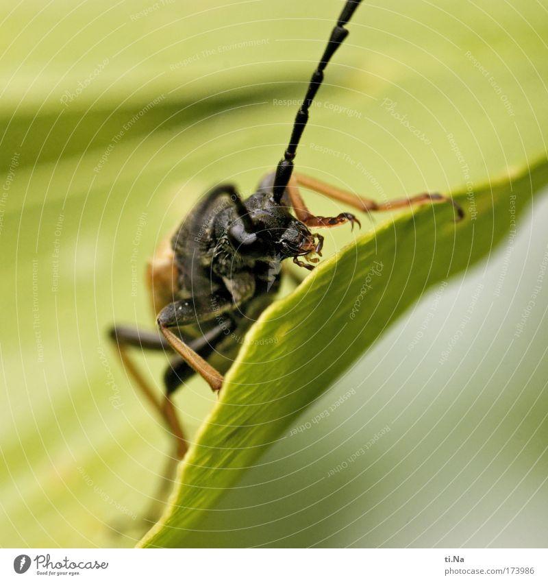 Kalle Käfer Natur Baum grün Pflanze schwarz Tier gelb Landschaft Umwelt fliegen frei Wachstum entdecken Wildtier Fühler