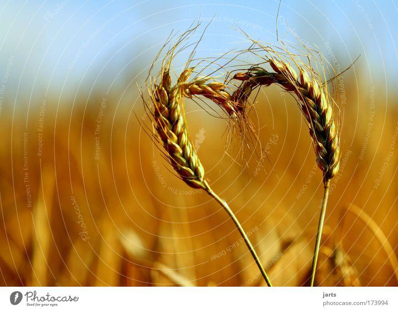 more nature love Lebensmittel Getreide Teigwaren Backwaren Umwelt Natur Sommer Schönes Wetter Nutzpflanze Feld frisch Gesundheit natürlich Liebe Gelassenheit