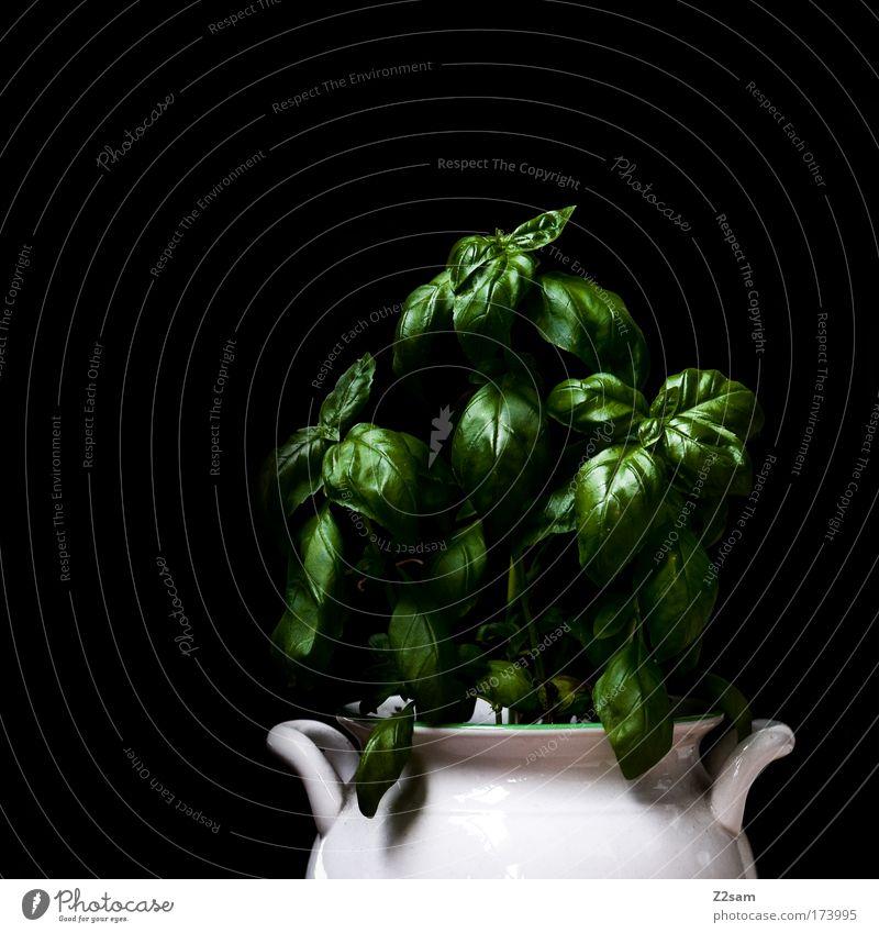 homegrown Farbfoto Studioaufnahme Zentralperspektive Lebensmittel Kräuter & Gewürze Pflanze Grünpflanze Topfpflanze frisch Gesundheit Basilikum grün Metall