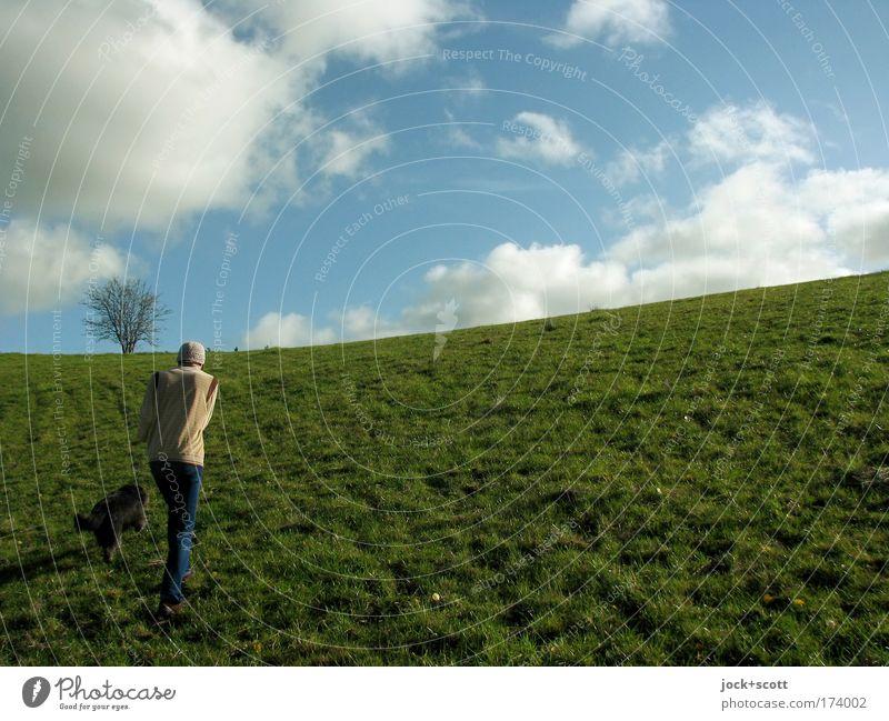 moln.se grüner Hügel in Schweden Spaziergang Mensch maskulin 1 Landschaft Tier Wolken Sommer Schönes Wetter Baum Wiese Hund laufen frei natürlich Gefühle