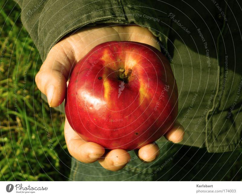 adam. apfel. Mensch Kind Hand rot Leben Wiese Ernährung Lebensmittel Junge Garten Gesundheit Kindheit Zufriedenheit Frucht Haut wandern