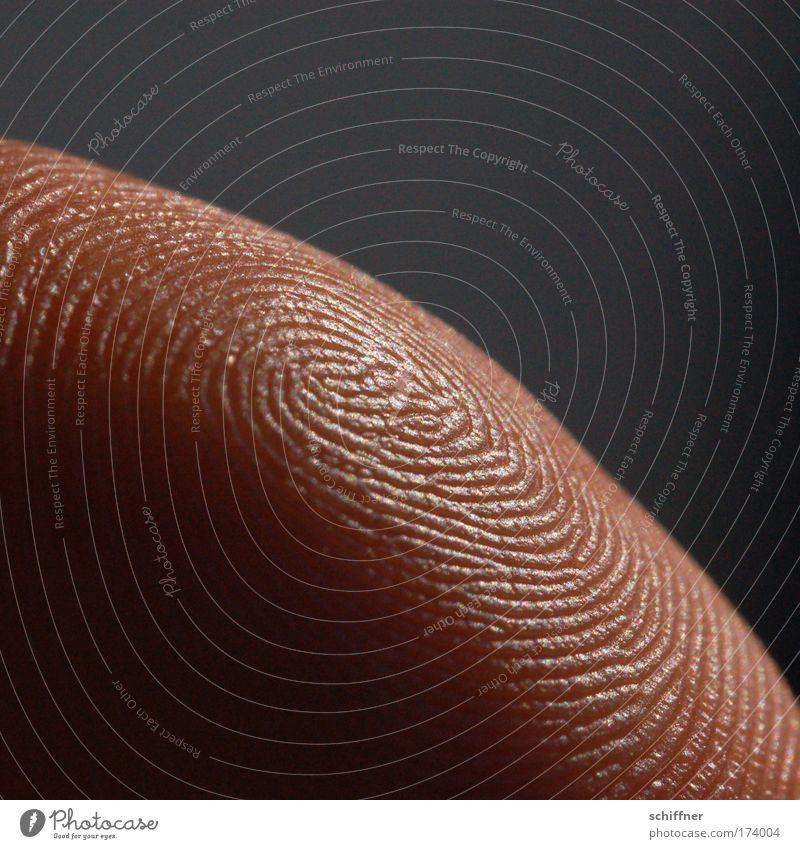 Irrgarten Makroaufnahme Haut Hand Finger Fingerabdruck Profil Papillarleisten einzigartig Fingerkuppe Daumen Ordnung Mensch Bogen Windung Tag