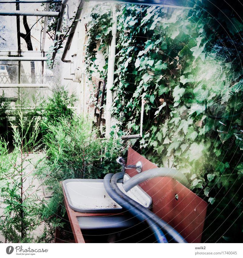 Treibhauseffekt Sträucher Grünpflanze Wildpflanze Topfpflanze Efeu Kletterpflanzen Wildwuchs Gebäude Gewächshaus Glasfassade Waschbecken Mauer Wand