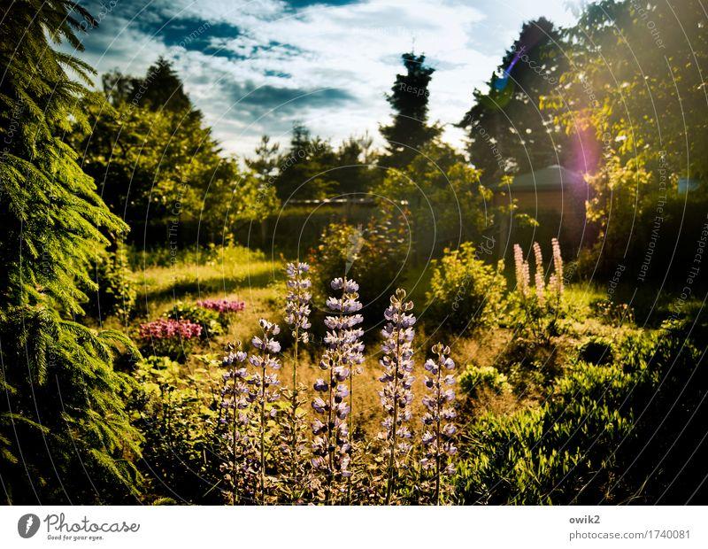 Duftgarten Umwelt Natur Landschaft Pflanze Himmel Wolken Frühling Klima Schönes Wetter Baum Blume Gras Sträucher Blatt Blüte Lupine Lupinenblüte Garten Blühend