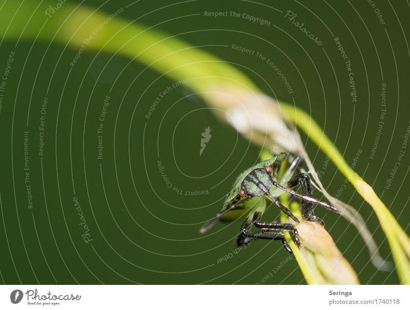 Um die Kurve Natur Pflanze Landschaft Blatt Tier Wald Umwelt Blüte Wiese Gras Garten Park Wildtier Flügel Tiergesicht Käfer