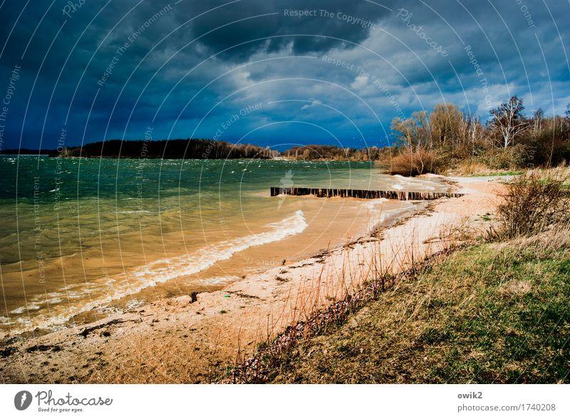 Wildes Wetter Natur Pflanze Wasser Baum Landschaft dunkel Umwelt kalt Herbst Gras Küste See wild Regen Horizont Wellen