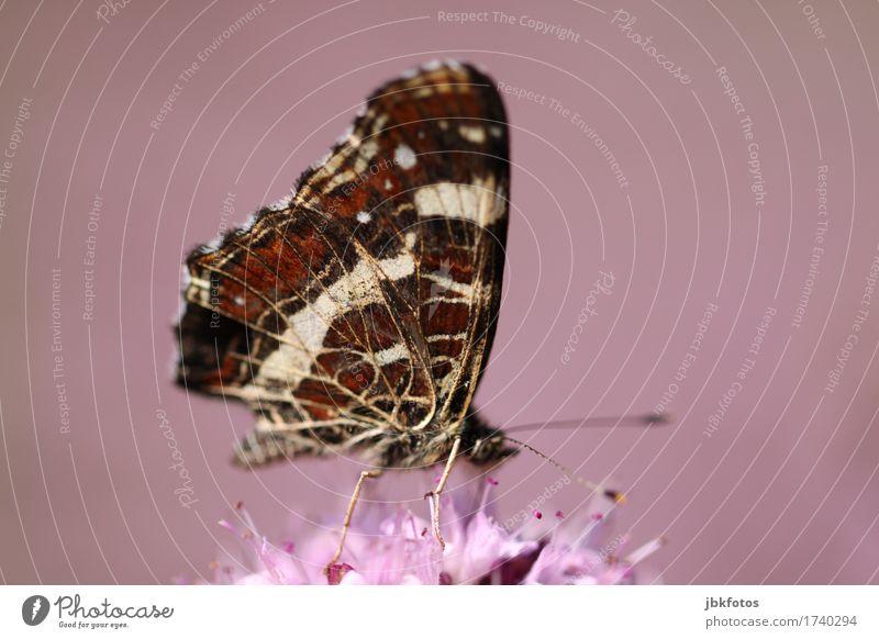 [ohne Titel] Lifestyle exotisch Freude Glück Umwelt Natur Tier Wildtier Schmetterling 1 Fröhlichkeit Zufriedenheit Lebensfreude Frühlingsgefühle Neugier
