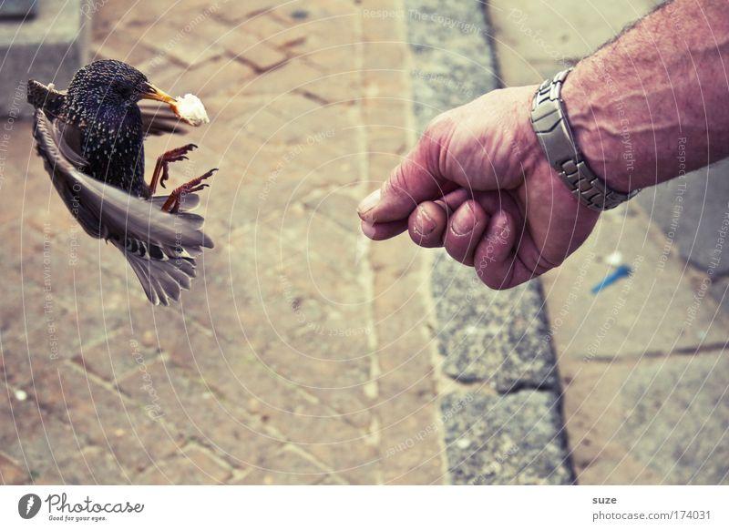 Star-Allüren Freude Freizeit & Hobby Mensch Arme Hand Umwelt Sommer Schönes Wetter Platz Tier Wildtier Vogel 1 fliegen füttern frech frei Tierliebe Flügel