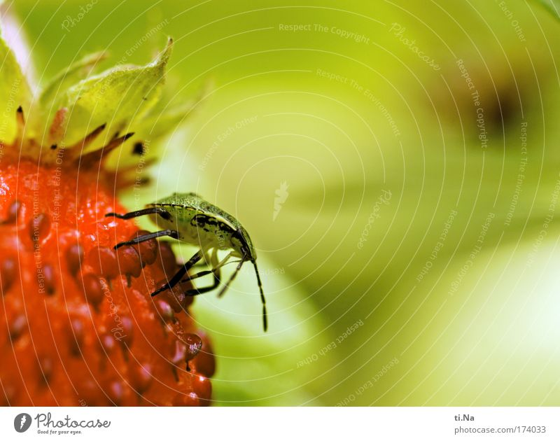 Das ist meine! Natur grün Pflanze rot Ernährung Tier gelb Landschaft warten Umwelt frisch Wachstum beobachten Kontakt Wildtier lecker