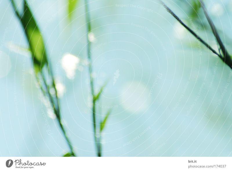 [PC-Usertreff Züri]: China am Zürchersee Himmel blau schön Pflanze ruhig Erholung Gras glänzend Wassertropfen natürlich Sträucher leuchten Tau harmonisch