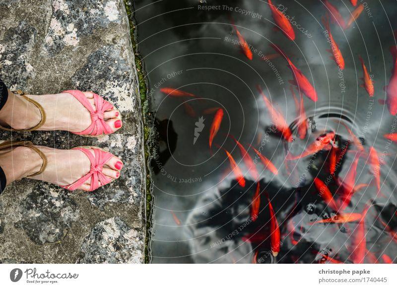 dont feet the fishes Ferien & Urlaub & Reisen Ausflug feminin Fuß 1 Mensch Park Teich See Schuhe Damenschuhe Sandale wedges Tier Fisch Goldfisch Schwarm Stein