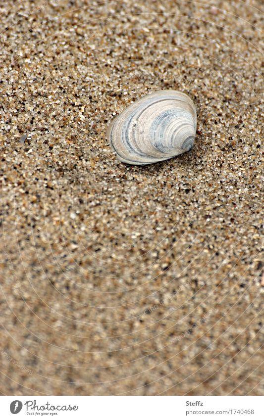 Strandmuschel Muschelschale Sandstrand Sandkörner Fundstück Erholung Urlaubsstimmung Juli achtsam sommerliche Impression erholen sommerliche Stimmung
