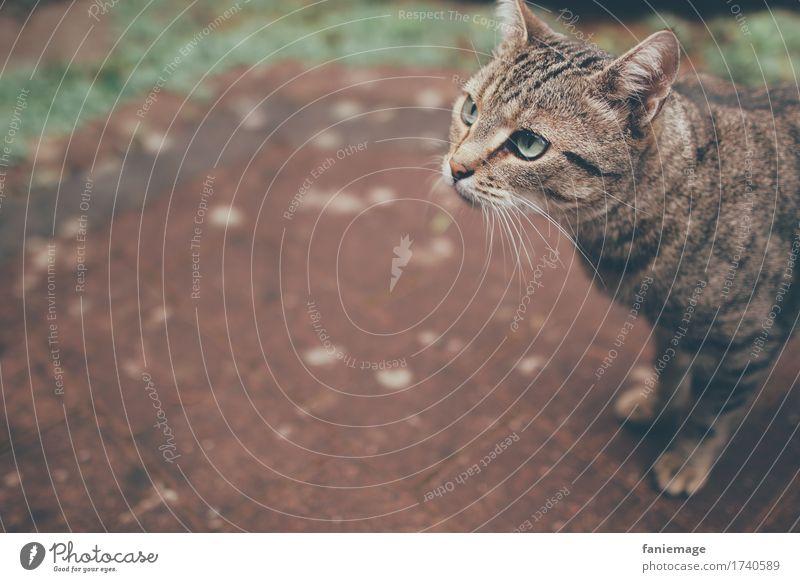 aufmerksam Natur Tier Haustier Katze 1 klein Hauskatze Wachsamkeit Katzenkopf Textfreiraum links Schwache Tiefenschärfe Schnurrhaar Auge grün Terrasse pflastern