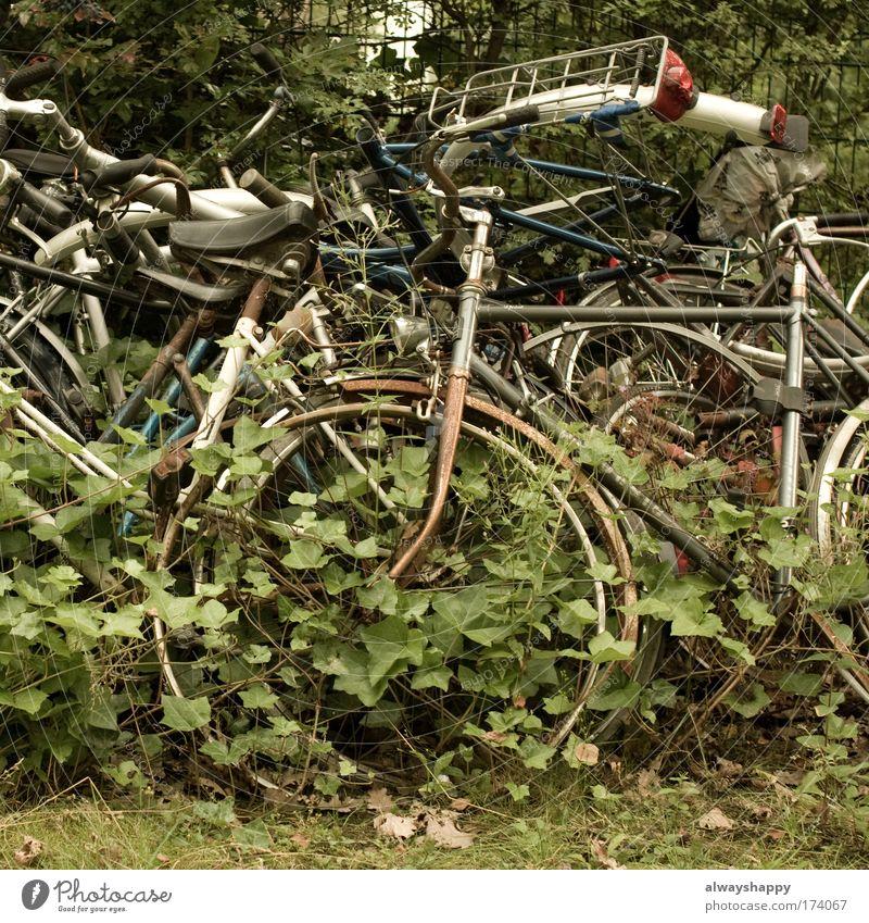 quasi Gold Umwelt Gras Traurigkeit Metall Fahrrad Müll Vergänglichkeit Güterverkehr & Logistik skurril Umweltschutz Personenverkehr Umweltverschmutzung Efeu
