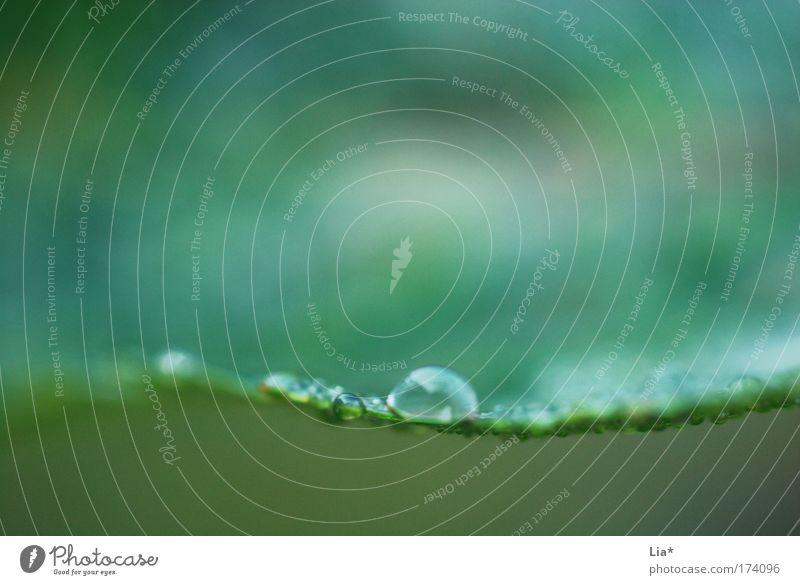 aquarell Natur grün Pflanze Blatt ruhig Erholung Zufriedenheit Hintergrundbild nass Wassertropfen Tropfen zart feucht