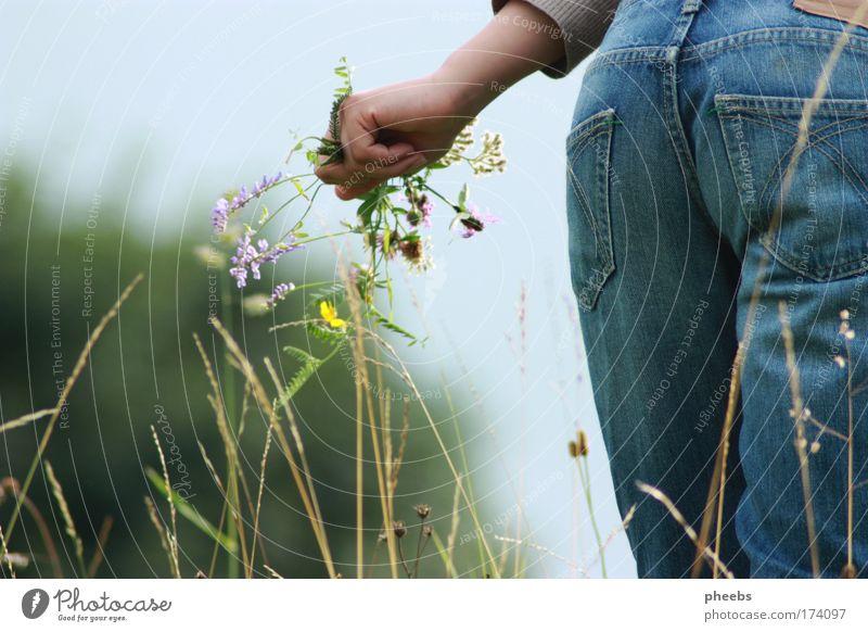 blumen.fee Natur Hand Himmel Sonne Blume Sommer Wiese Gras Hose