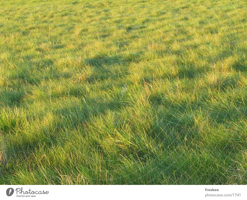 gras grün Herbst Wiese Gras Wind Spaziergang