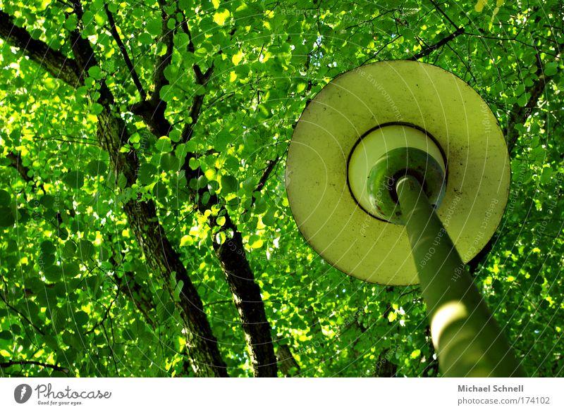 Laternenblätterdach - mein Erstes! grün Baum Blatt gehen Blätterdach Tag