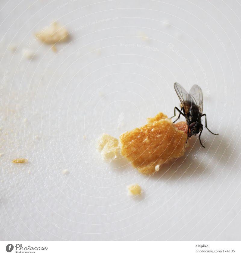 Festmahl weiß Tier schwarz Beine Fliege Ernährung Flügel Schneidebrett Krümel Manuelles Küchengerät Brotkrümel