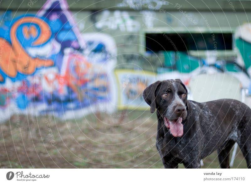 Seitenblick Stadt Tier Hund Graffiti braun Coolness Haustier Bunker Jagdhund Jugendkultur Urbanisierung Rassehund