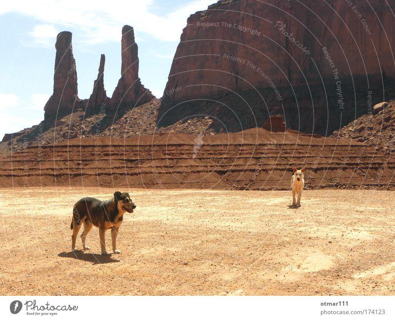 Wilde Hunde im Monument Valley Farbfoto Gedeckte Farben Außenaufnahme Dämmerung Schatten Silhouette Totale Tierporträt Ferien & Urlaub & Reisen Abenteuer Ferne