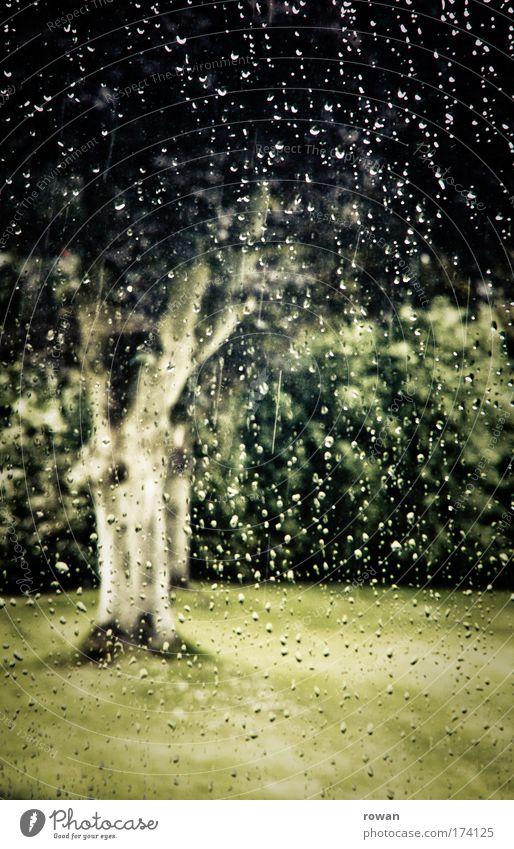 blick aus dem fenster Farbfoto Gedeckte Farben Außenaufnahme Tag Natur schlechtes Wetter Unwetter Regen Gewitter Pflanze Baum Gras Grünpflanze Park Wiese Blick