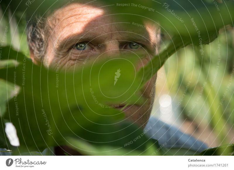 Tschingderassabumm | klopft mein Herz maskulin Mann Erwachsene Kopf Auge 1 Mensch Natur Pflanze Sommer Nutzpflanze Garten beobachten schön einzigartig blau