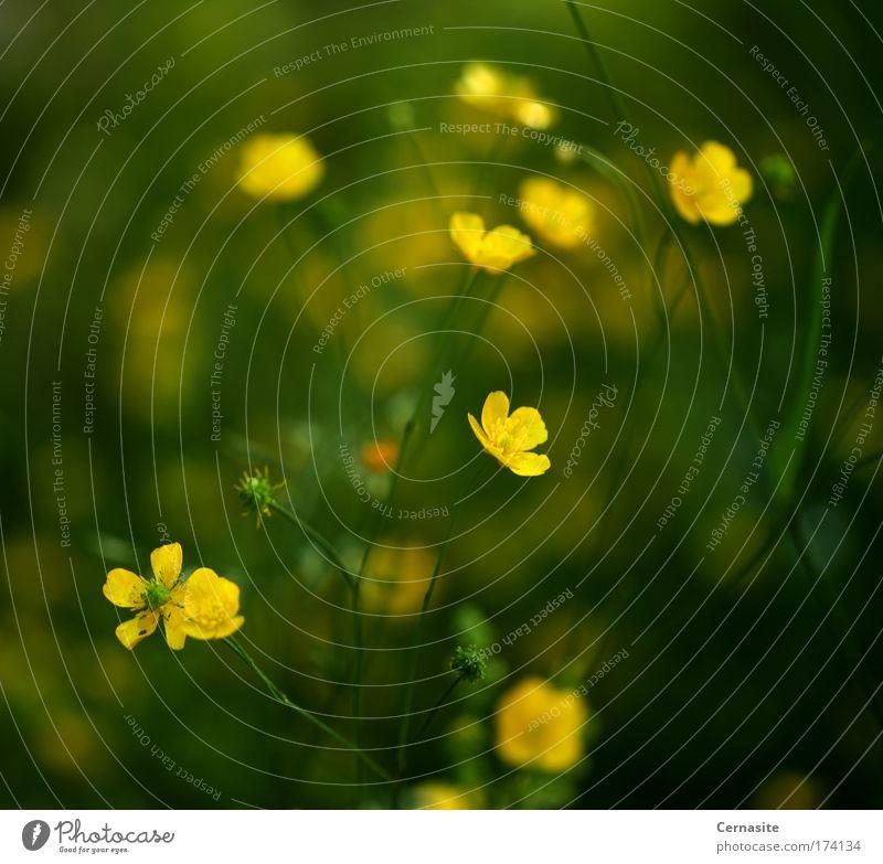 Natur grün Baum Pflanze Sommer Blume Umwelt gelb Wiese Wärme Gras Blüte Park Erde Feld wild
