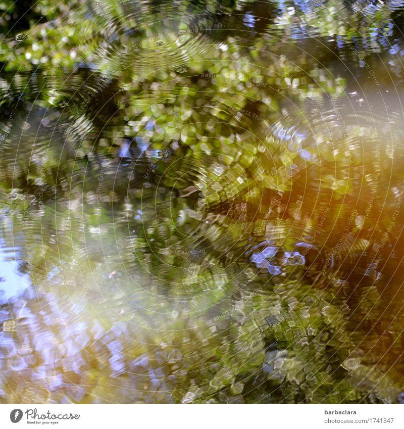 Klangfarbe | Wasser Klima Baum Blatt Park Teich See blau grün Stimmung Bewegung Erholung Freizeit & Hobby Natur Sinnesorgane Umwelt Farbfoto Außenaufnahme