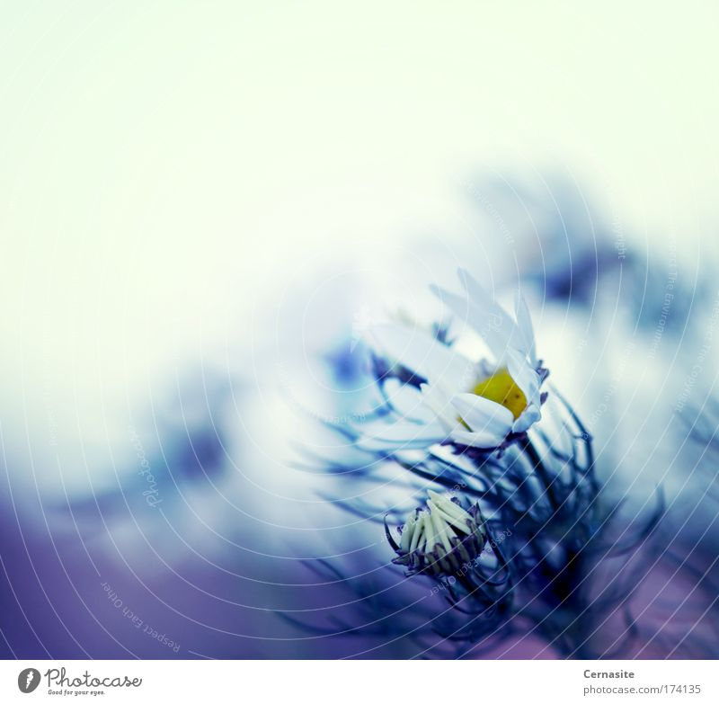 Natur Wasser weiß Blume blau Pflanze Sommer Strand gelb dunkel Blüte Wärme Luft Küste Wind frisch