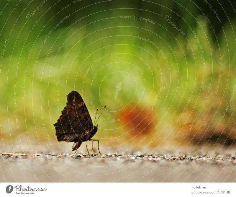 Kleine Pause Farbfoto mehrfarbig Außenaufnahme Menschenleer Textfreiraum rechts Textfreiraum oben Tag Sonnenlicht Unschärfe Umwelt Natur Pflanze Tier Erde