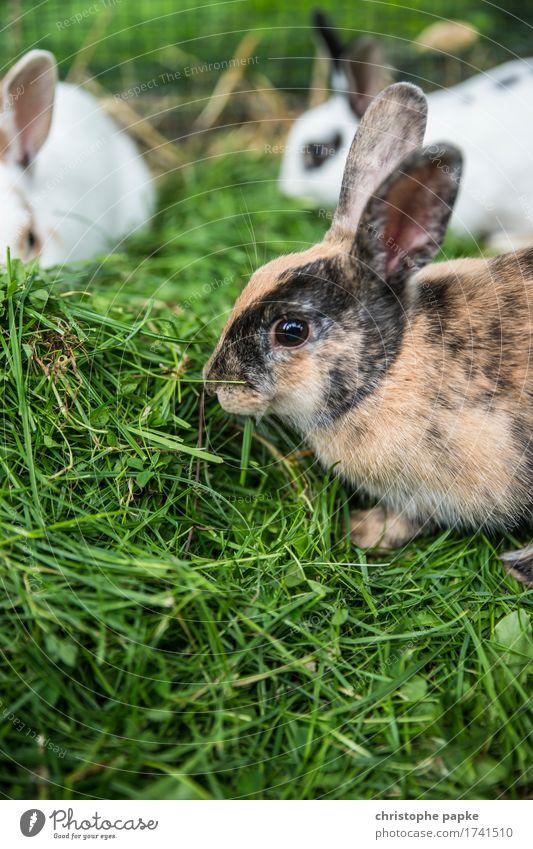 Rudelfuttern Essen Tier Gras Fell Haustier Streichelzoo Tiergruppe Fressen füttern frisch niedlich Tierliebe Hase & Kaninchen mehrere Ostern Farbfoto