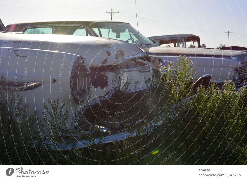 Blumen auf Autowrack Verkehrsunfall Fahrzeug PKW Oldtimer Limousine DeSoto Chevrolet Firedome Straßenkreuzer alt ästhetisch dreckig dunkel groß historisch retro