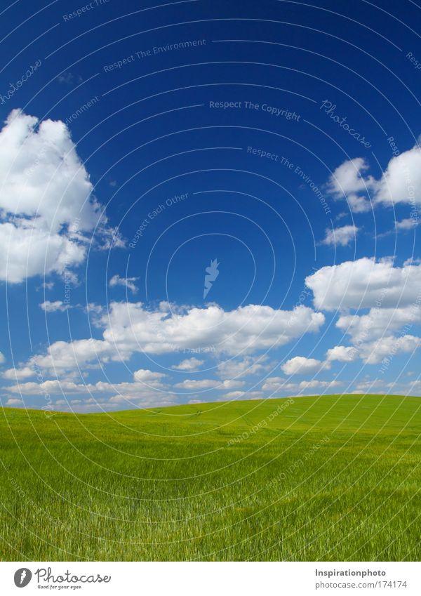 Grüne Idylle Natur Himmel weiß grün blau Pflanze Sommer Wolken Arbeit & Erwerbstätigkeit Gras Landschaft Stimmung Feld Gesundheit Wetter Umwelt