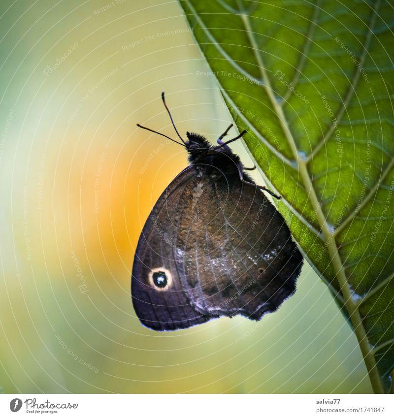 Augenblick Natur Pflanze Sommer Farbe grün Erholung Blatt Tier ruhig Umwelt natürlich orange Design Wildtier ästhetisch