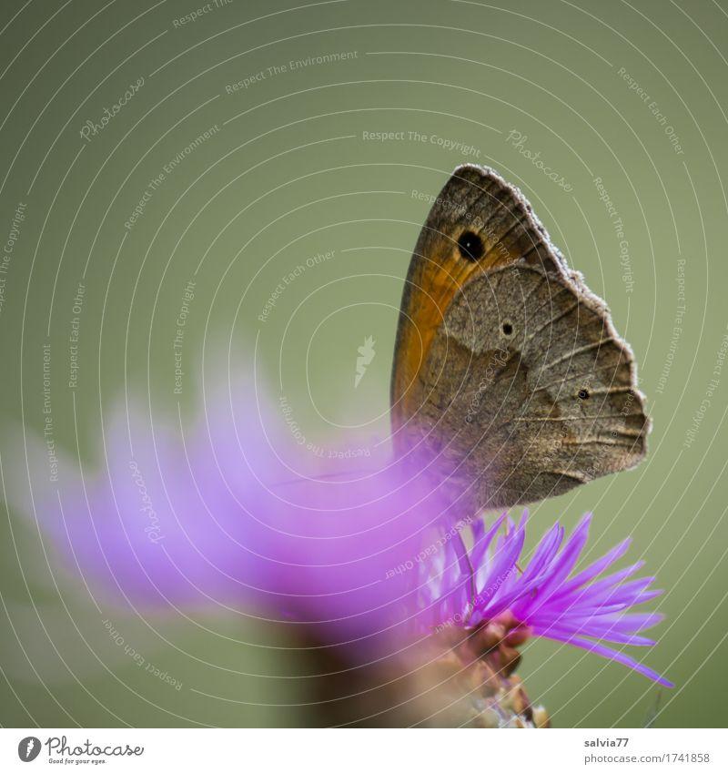 Eintauchen Natur Pflanze Sommer Blume Tier Umwelt Blüte Liebe Glück grau Wildtier Idylle genießen Flügel violett lecker