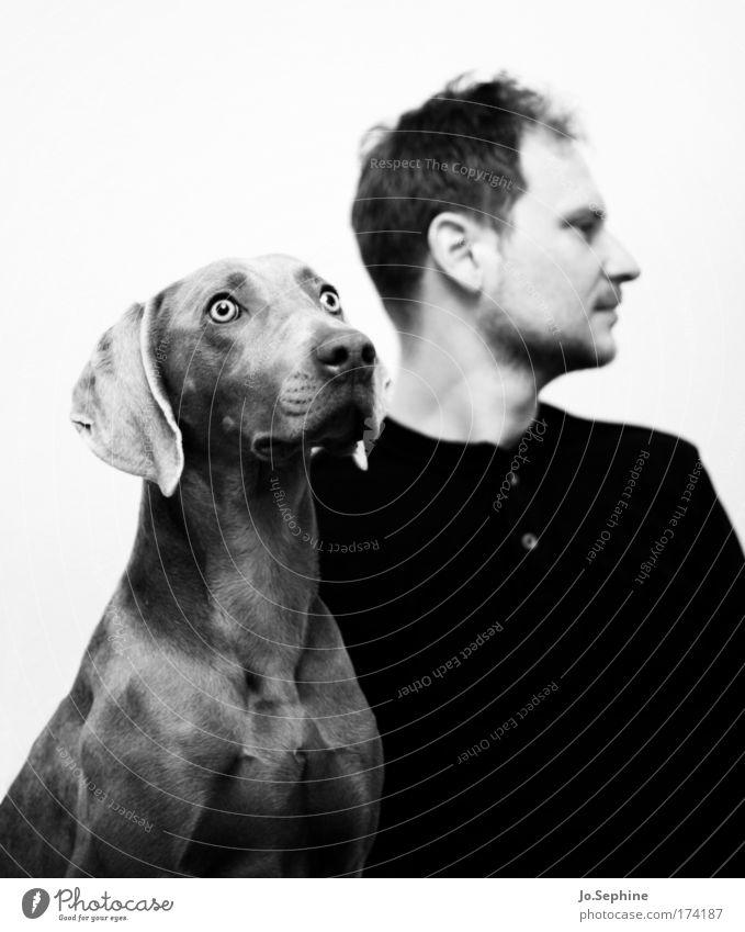 Ehekrach maskulin Mann Erwachsene 1 Mensch 30-45 Jahre Tier Hund Gefühle Enttäuschung Einsamkeit ignorant trotzig Partnerschaft Trennung Weimaraner Fell