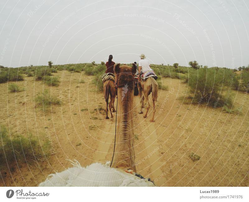 Kamel Safari Ferien & Urlaub & Reisen Tourismus Ausflug Abenteuer Ferne Freiheit Expedition Sommer Sommerurlaub Frau Erwachsene Mann Umwelt Natur Landschaft