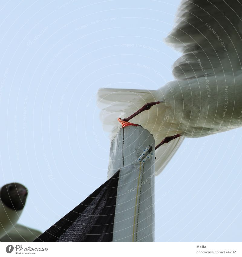Weg da, jetzt komm ich! - Die Zweite Tier Vogel fliegen Möwe