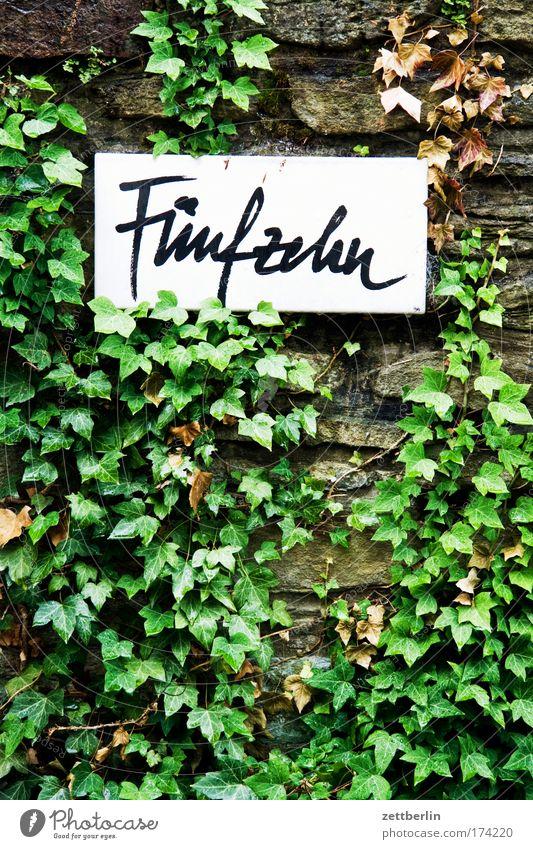 Fünfzehn Pflanze Blatt Haus Wand Mauer Schilder & Markierungen Schriftzeichen Ziffern & Zahlen Schriftstück Mathematik zählen Efeu Beschriftung 15 Hausnummer